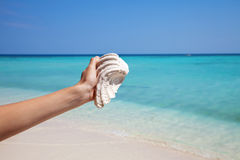 Holding a mussel on an exotic beach Stock Photography