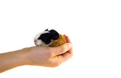 Holding a newborn in a hand. (give shelter Royalty Free Stock Photography