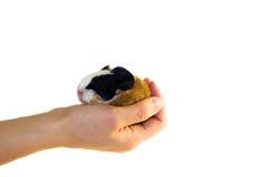 Holding a newborn in a hand