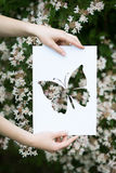 Holding paper cut miniature butterfly over blooming tree Stock Photography