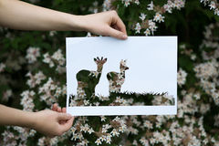 Holding paper cut miniature deers over blooming tree Royalty Free Stock Photography