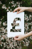 Holding paper cut miniature pound over blooming tree Royalty Free Stock Image