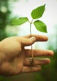 Holding plant Stock Photo