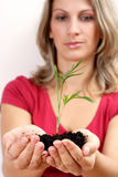Holding plant Stock Photography