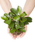 Holding plant Royalty Free Stock Photography
