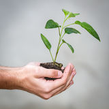 Holding a Plant Royalty Free Stock Images