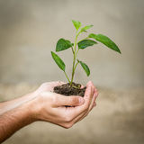 Holding a Plant Stock Images