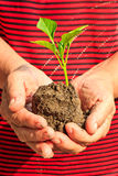 Holding plant seedling Stock Images