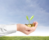 Holding plant sprouting from  handful of coins Royalty Free Stock Photos