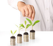 Holding plant sprouting from a handful of coins Royalty Free Stock Photos