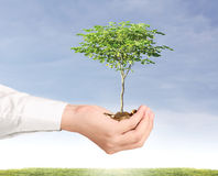 Holding plant sprouting from a handful of coins Royalty Free Stock Photography