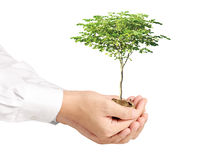 Holding plant sprouting from a handful of coins Stock Photos