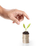 Holding plant sprouting from a handful of coins Stock Images