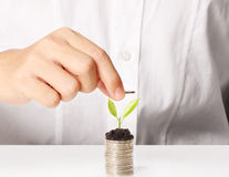 Holding plant sprouting from a handful of coins Royalty Free Stock Image