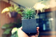 Holding pot with a plant. With blur background Royalty Free Stock Photos