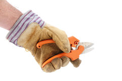 Holding Pruning Shears Using Leather Work Glove Royalty Free Stock Photos
