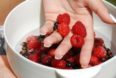 Holding raspberries in the hand. Woman hand holding white bowl with raspberries and black currants Royalty Free Stock Photos