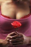 Holding red rose Stock Image