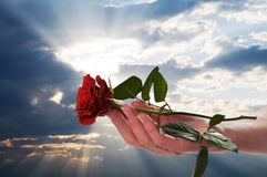 Holding red rose in romantic scenery royalty free stock photos