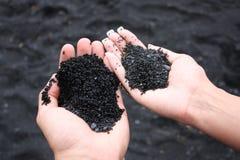 Holding-Sand vom schwarzen Sand-Strand Stockfoto