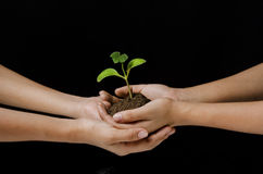 Holding sapling Stock Photo