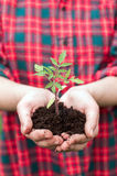 Holding seedling Stock Photography