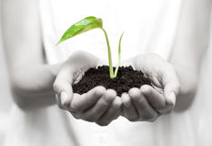 Holding small plant Royalty Free Stock Photography
