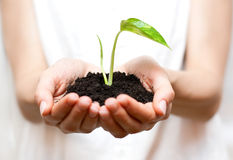 Holding small plant Stock Image
