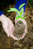 Holding a small plant Stock Photo