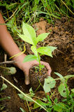 Holding a small plant Stock Image