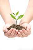 Holding Small Plant Stock Photos