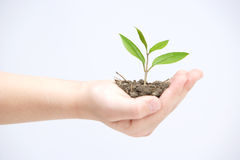 Holding small plant Royalty Free Stock Images