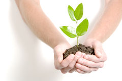 Holding a small sprout royalty free stock image