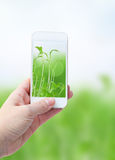 Holding smart phone against green nature Royalty Free Stock Photography