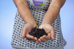 Holding soil and plant. Royalty Free Stock Image
