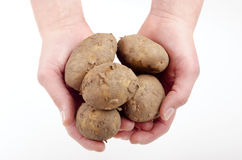 Holding some potato Stock Photos