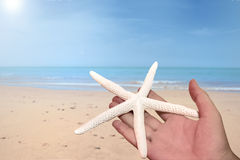 Holding starfish Stock Image