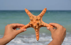 Holding a starfish Royalty Free Stock Photos