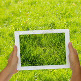 Holding tablet against spring green background Royalty Free Stock Photos