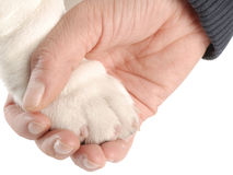 Holding on to a dogs paw Stock Photo
