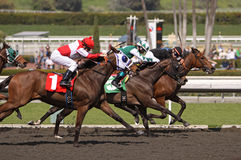 Holding On to Win. ARCADIA, CA - 13 MAR: Jockey Michael James checks out his fast approaching competition, but manages to pilot Malibu Artiste to a win in a Stock Photography