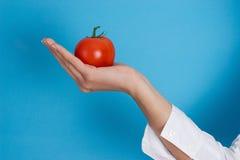 Holding tomato Royalty Free Stock Image