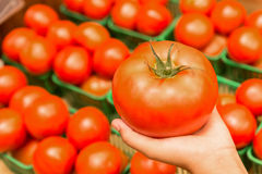 Holding tomatoe Royalty Free Stock Image