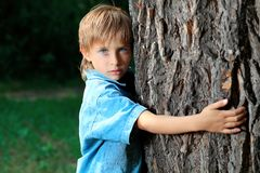 Holding tree Stock Photos