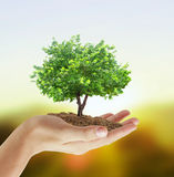 Holding a tree Stock Images