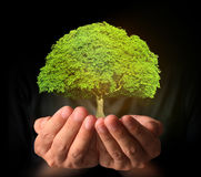 Holding tree sprouting Royalty Free Stock Image