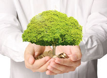 Holding tree sprouting from a handful of coins Royalty Free Stock Images