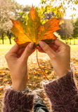 Holding up autumn leaf Royalty Free Stock Photography