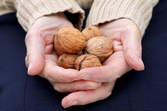 Holding walnuts Stock Photography