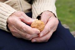 Holding walnuts Stock Photos
